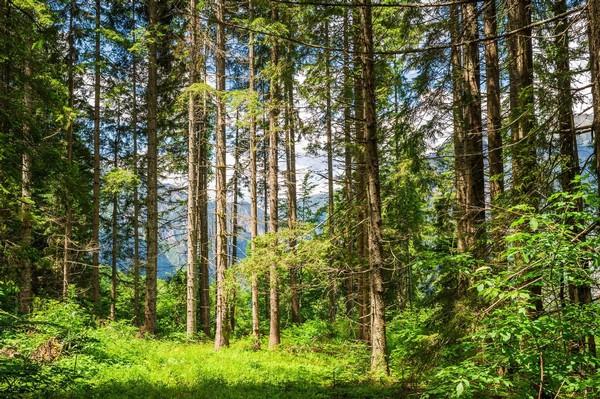 Küchenherde Holzfeuerung österreich: K?chenherde fliesen und ...